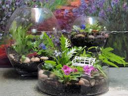 growing plants in small terrariums sunday gardener