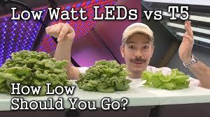 t5 vs led grow lights low watt leds vs t5 grow lights seed starting lettuce test youtube