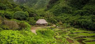 limahuli garden u0026 preserve national tropical botanical garden