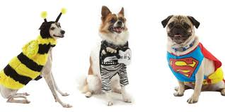 Halloween Dogs Costumes Dog Halloween Costumes Cute Dogs Halloween Costumes
