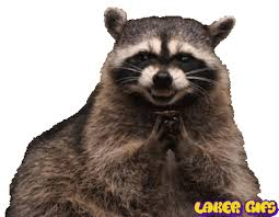 Raccoon Excellent Meme - devious raccoon is devious lakersgifs animated laker gifs laker