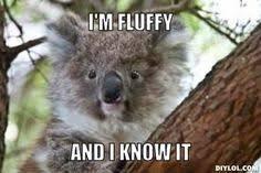 Angry Koala Meme - angry koala meme different types of funny animal memes pinterest