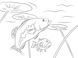 coloring page coloring fish pages largemouth basses page