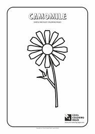 simple easy coloring pages toddlers camomile simple