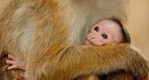 free monkey kingdom activity booklet u0026 educator u0027s guide