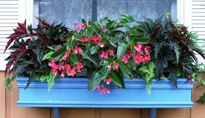 Flowers For Window Boxes Partial Shade - color up your shade garden with begonias