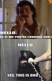 Internet Meme Origins - this dog is not what it seems serbian meme and internet