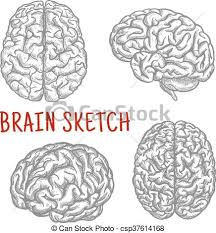 human brain at different angles engraving sketches brain clip