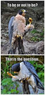 Funny Meme Animals - funny animal memes daily paws daily paws