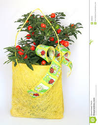 christmas plants for gifts home design u0026 architecture cilif com