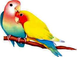birds images Love birds wallpapers wallpaper cave jpg