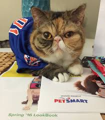 interviews with cats george and wheezy brooklyn kitties with the