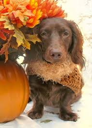 49 best thanksgiving puppies images on happy