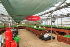 edible ornamentals introduction to hydroponic chilli growing
