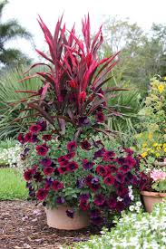 colorful flower gardens 867 best flowers gardens containers perennials annuals