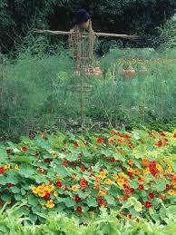 126 best food not lawns images on pinterest edible garden