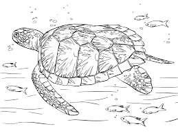turtle coloring book pages get coloring pages