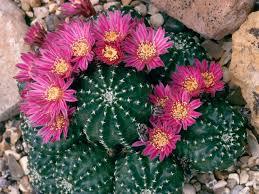 flowering succulents diy
