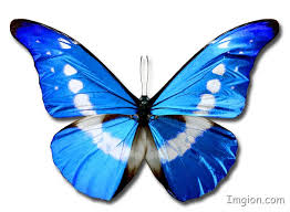 butterfly with blue and white wings