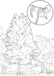 aspen tree coloring page free printable coloring pages