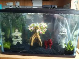 betta than a bowl betta fish aquariums betta tank inspiration