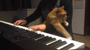 Cat Playing Piano Meme - you shall not pass dog