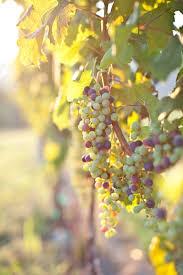 Map Of Virginia Wineries by Virginia Terroir U2013 Garden U0026 Gun