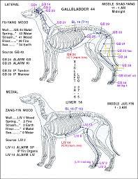 Dog Anatomy Front Leg Canine Points