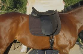 Horse Saddle by Are Saddles Instruments Of Torture U2013 Northern California U0027s 1