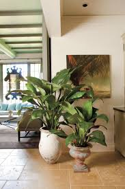 best indoor houseplants southern living