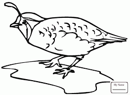 coloring pages for kids quails california quails birds