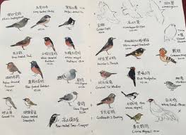citizen science on the tibetan plateau u2013 birding beijing 北京观鸟