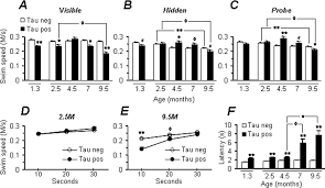 age dependent neurofibrillary tangle formation neuron loss and