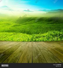 wood platform landscape view of tea plantation with blue sky in