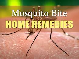 How To Get Rid Of Mosquitoes In My Backyard Mosquitoes In House How To Get Rid Of Apps For Dropbox