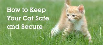 How To Keep Cats Out Of Your Backyard Can Indoor Cats Enjoy Safe Fun Outside Too How To Keep Your Cat