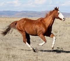 Nice Hourse Owl Canyon Horse Services