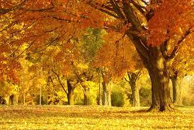 imagenes de otoño para fondo de escritorio fondo pantalla paisaje de otoño