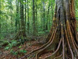 native plants in the tropical rainforest warm temperate rainforest an australian habitat steve parish