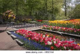 the keukenhof is de most beautiful flower park in the world stock