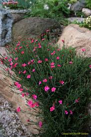 Alpine Rock Garden by Dianthus In The Rockery Need These In Blue Or Purple Garden