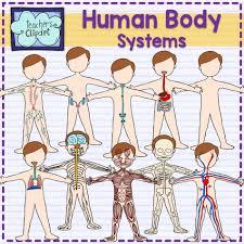 body systems u2013 hd m com
