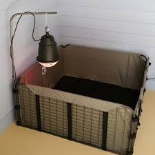 prima heat lamp ezwhelp