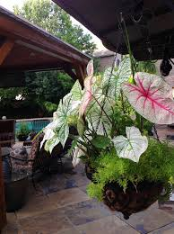 Hanging Plants For Patio 10 Best Hanging Baskets Images On Pinterest Gardening Balcony