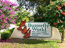 butterfly gardening plants to attract butterflies hummingbirds