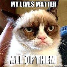 Evil Cat Meme - cats are evil meme the best cat of 2018