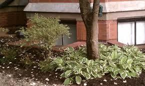 Landscaping Ideas Around Trees Garden Ideas Around Trees Perfect Home And Design City Arafen