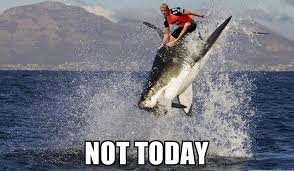 Funny Shark Memes - the best mick fanning shark attack memes to bless the internet