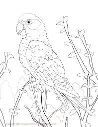 parakeet coloring pages mobile parakeet mobiles parakeet