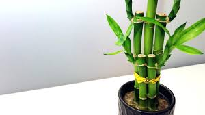 office design indoor plants for office feng shui feng shui